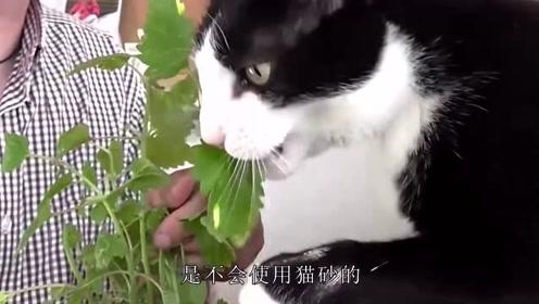 自家喵主子脾气大得很,总是不爱用猫砂,教你一招轻松解决