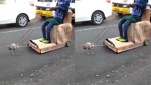 """印度街头一辆改装车,搭载天然""""发动鸡"""",回头率高达100%"""