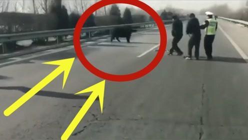 活了30多年,第一次见高速上突现一头大黑牛,接下来警察都傻眼了!