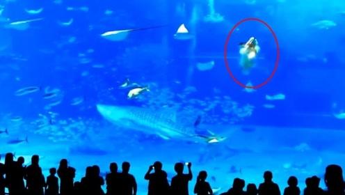 水族馆剑鱼寻死,一头撞向玻璃当场身亡,镜头拍下全过程!