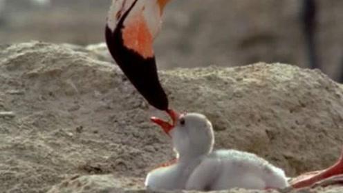 真正喝爸妈血长大的动物,长相美丽成为ins风代表,镜头记录全过程