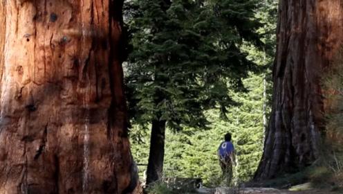 世界最赚钱的伐木工,收入高达八十万,一不小心却会搭上命!
