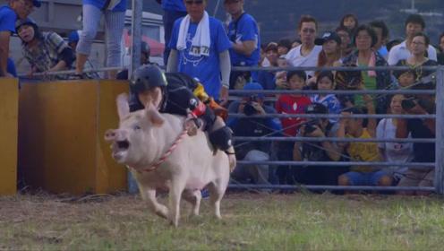 """日本独创""""骑猪""""比赛,绳子套住猪脖子,猪:有考虑过我的感受吗"""