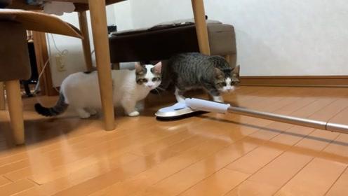 趣味萌宠:可爱小猫咪在一起玩耍