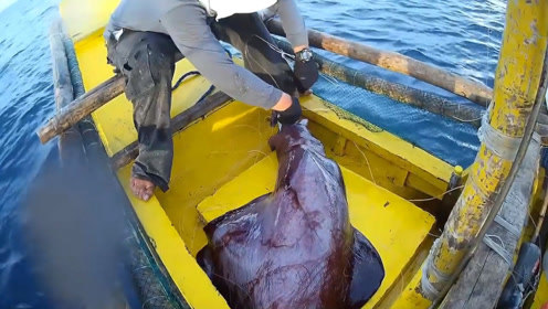 渔民捕获一个吸血鬼乌贼,触手上都是倒钩!