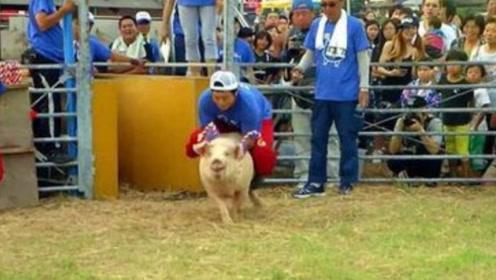 """日本""""爆笑""""骑猪比赛,坚持10秒奖励50万,网友:考虑过猪的感受吗?"""