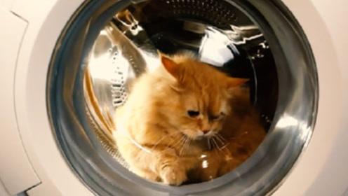 作死傻猫误闯洗衣机,被洗了近一个小时,主人捞出来心疼坏了