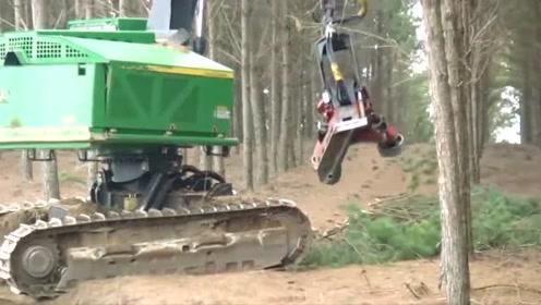 挖掘机改造的砍树机,这应该代表最先进的改造技术了吧