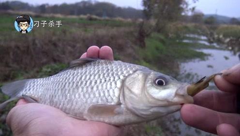 钓鱼这么多年,第一次见鲫鱼这么猛,生吃黄颡鱼?