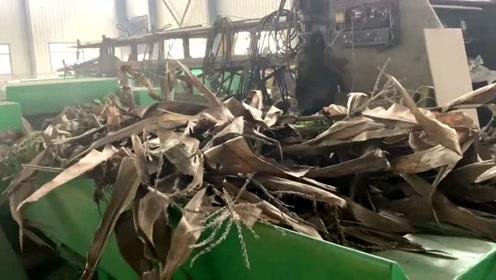 全株黄储玉米秸秆揉丝机 养殖业买一台后很满意