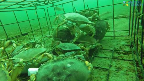 神奇的捉螃蟹工具,外面的想进去里面的想出来,镜头记录全过程