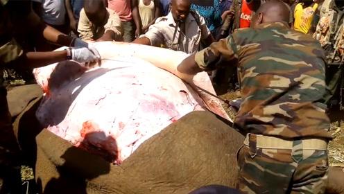 大象肉又粗又糙,为啥还深受非洲人喜欢?网友:难怪这么穷!
