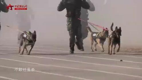 《谁是终极英雄》20191208 永不退役的警犬