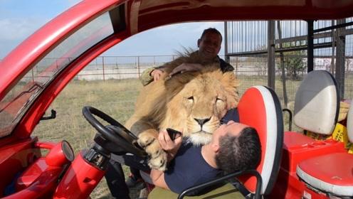 男子3年前救下小狮子,时隔千日再次相见,场面一度失控!