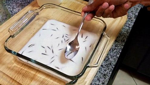 老外脑洞大开用牛奶养鱼,鱼在牛奶中能存活吗?下一秒画风突变!