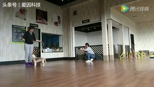 日本男子和宠物狗一起跳绳,挑战完成一项世界纪录