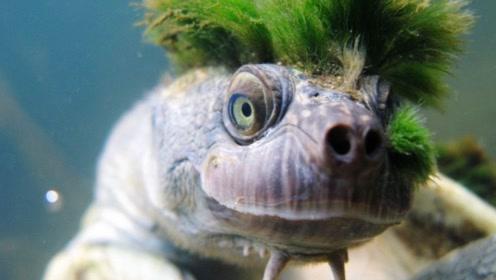 男子捡到一只小乌龟,越养越不对劲,结果傻眼了!
