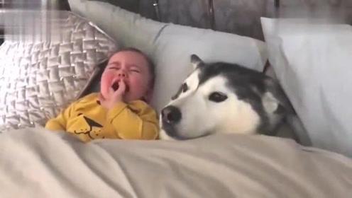原来这不是抱枕啊