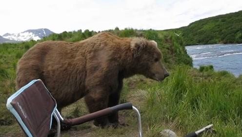 俄罗斯男子河边钓鱼,突然坐过来一只棕熊,下一秒让人感到意外