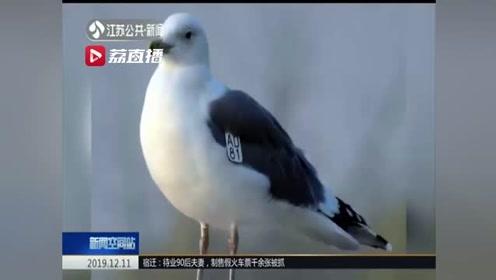 """蒙古银鸥""""AD81""""飞越2500公里 准时赶赴徐州冬季之约"""