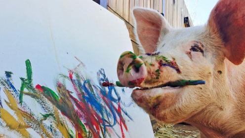 """世界上""""唯一""""会画画的猪,一幅画卖10万,人送称号""""猪加索"""""""