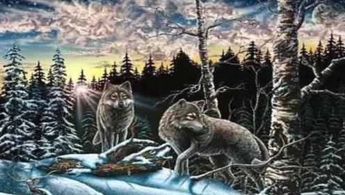 眼力测试:图中有多少只狼?8只及格,答案多到你想象不到