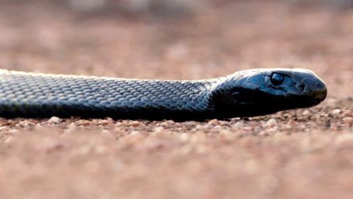 为何人类天生怕蛇?原来在人类崛起之前,巨蛇才是世界霸主!