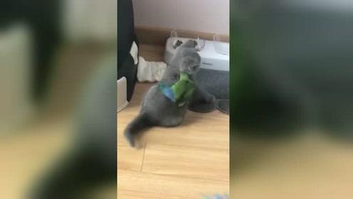 被小鸟戏耍的猫咪!