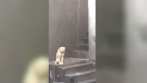 像极了单身狗过七夕的样子!