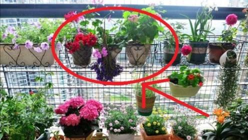 客厅养花就选这3种,招财镇宅又除煞,有钱人家都有!