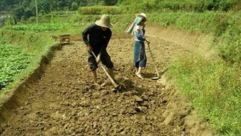 """农民犁地挖出一""""铁钩"""",上交国家得奖30元,现今估价高达10亿"""