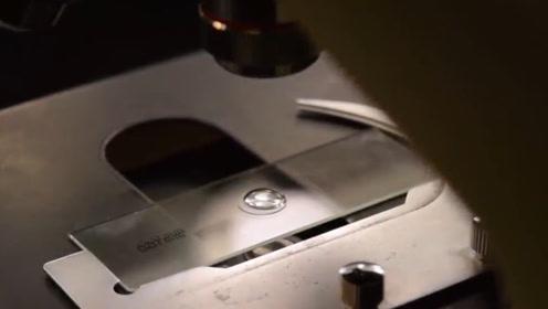 显微镜下看到的都是东西?仔细看完后,差点自闭了