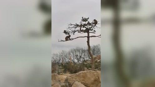 猴:来哥们一起摇起来,好吗?