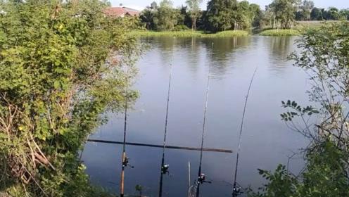 男子在河边撒下四根钓竿,一会就被拉响,看看这钓的是什么鱼