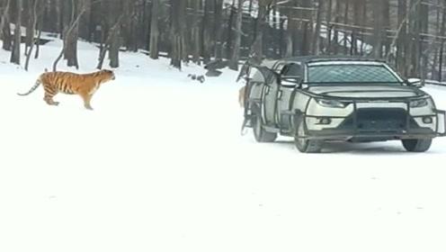 来而不往非礼也,这开车的司机,怎么扔了只鸟就走了?