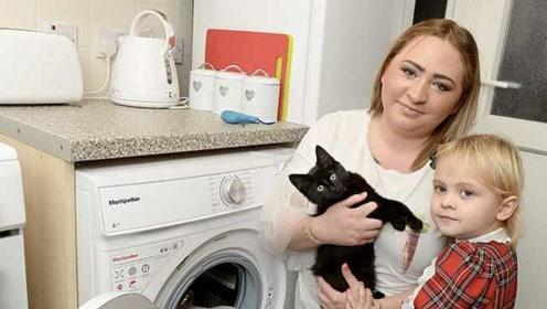 猫咪误进洗衣机,被洗20分钟后奇迹生还