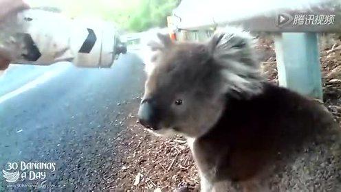萌萌哒!南澳考拉路边向人讨水喝
