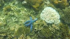 菲律宾卡加延圣安娜巴拉屿Palaui岛浮潜2