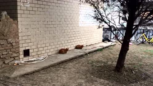抓拍到一双胞胎猫咪,表情神同步!