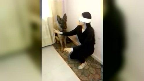 如果女主看不见了,看狗狗会怎么做?看完我哭了!