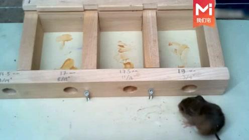 """老鼠真的会""""缩骨功""""吗,农民用木头打了几个小孔测试,太神奇了"""