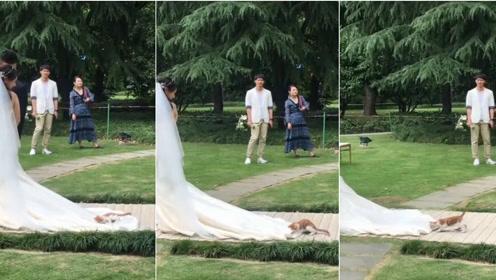 小猫躺在新娘婚纱上耍赖不让走 让人哭笑不得
