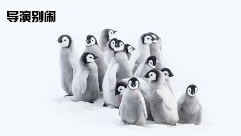 爆笑解说呆萌小企鹅的成长日记《帝企鹅日记2》
