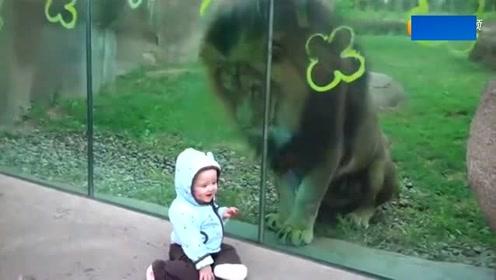 10个月小宝宝在狮子面前爬来爬去玩,下一秒宝宝反应,妈妈笑乐