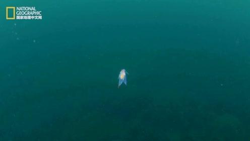 罕见的冰海天使:传说中的幸运之神,热恋的情侣们看到她那颗火热