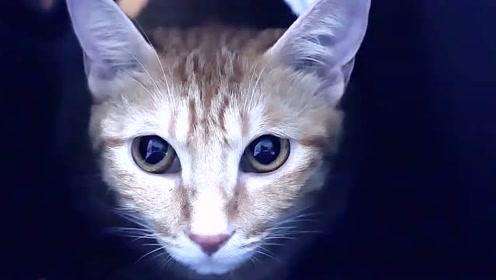 我跟猫交换灵魂了,超帅的