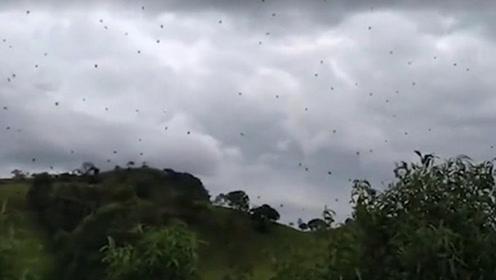 """巴西大群蜘蛛浮半空织""""天网"""" 远看宛如下起了""""蜘蛛雨"""""""