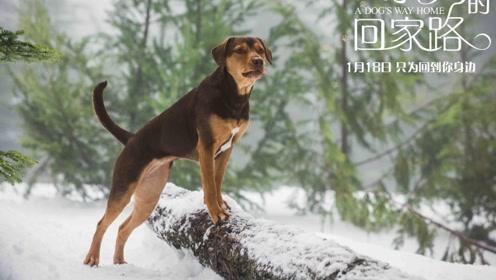 """《一条狗的回家路》伴你回家""""版预告 走失狗狗踏上万里回家路"""