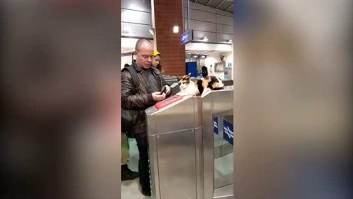 地铁猫咪票务员第一日返工果然尽忠职守,暂时未见有人逃票!