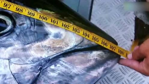 捕鱼生死斗:这条鱼真大  ,把我的绞盘都给弄坏了!